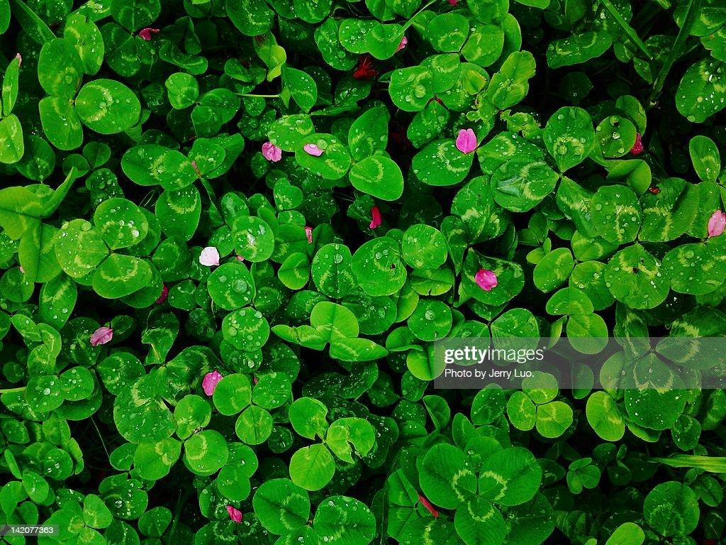 Green leafs : Stock Photo