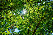 Bright sun burst through a green leafy tree canopy overhead, seen at Carnarvon Gorge, Queensland, Australia.  Unfocused