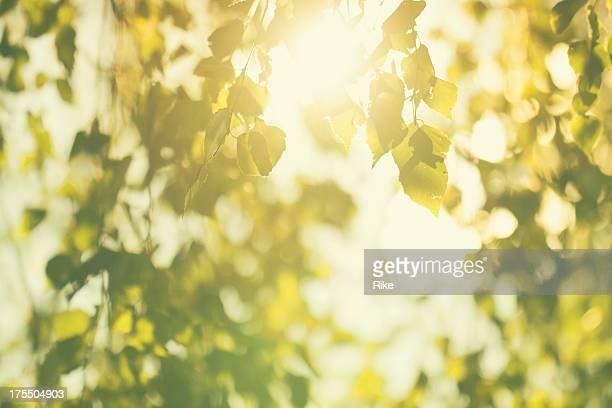 緑の葉に明るい太陽