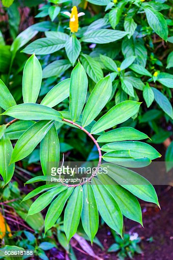 Green leaves at a tropical jungle. : Stock Photo