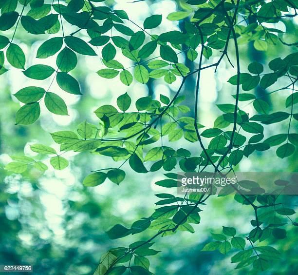 緑の葉のバックグラウンド