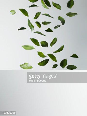 Green leaves falling