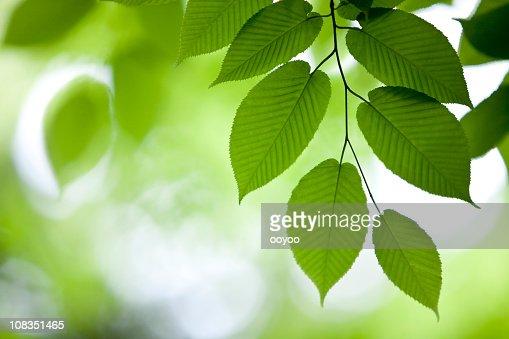 Green Leaves in the Forest : Stock Photo