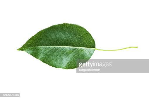 Green leaves isolated : Stock Photo