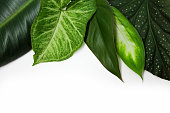 Green leaves of potted plants on a white background.