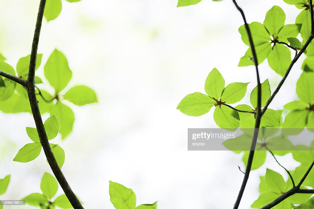 Green Leaves : Stockfoto