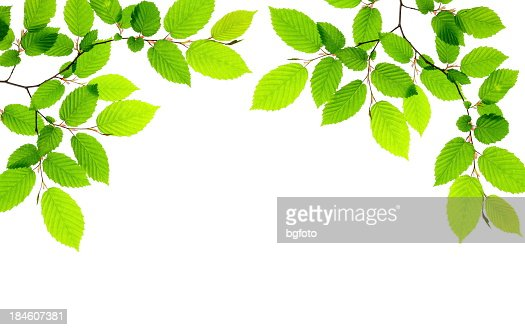 Green leaves providing a border on a white background