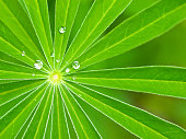 Green plant leaves radiating from center with water droplets and blurred background