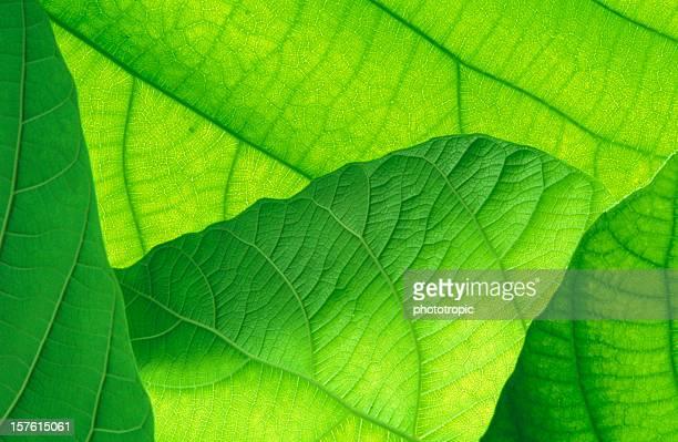 green leaves underside
