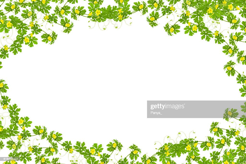 Green leaves with yellow flower frame isolated on white backgrou : Stock Photo
