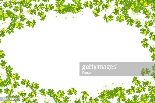 Green leaves with yellow flower frame isolated on white backgrou : Foto de stock