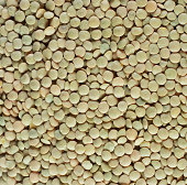 Green lentils (full frame)