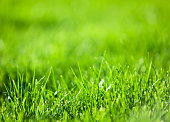 Nature background: green luscious grass.