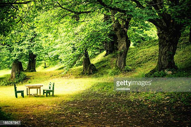 Green Lush Forest and Picnic Table