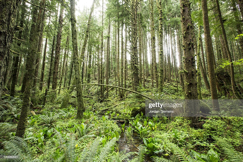 A green lush forest. : Stock Photo