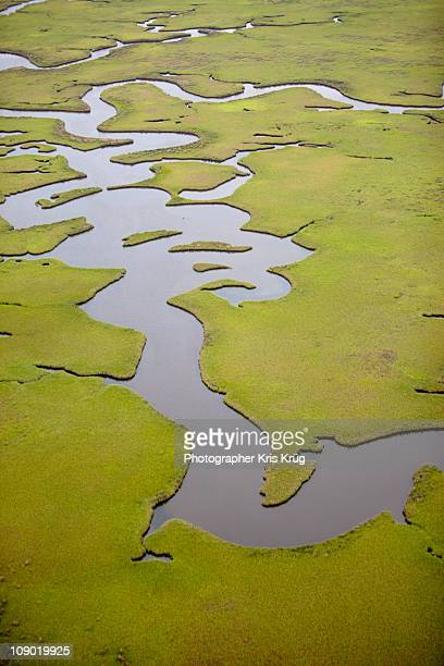 Green Marshlands and Water Pathways in Lousiana
