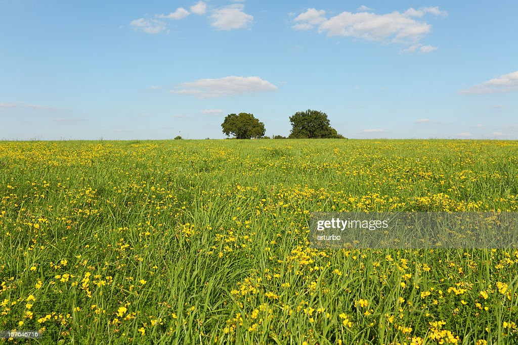 green meadow and blue sky : Stock Photo