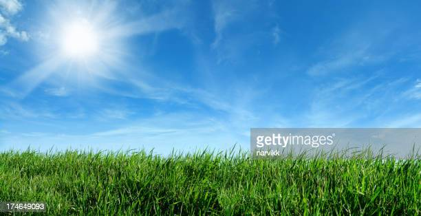 Green Meadow and Shining Sun