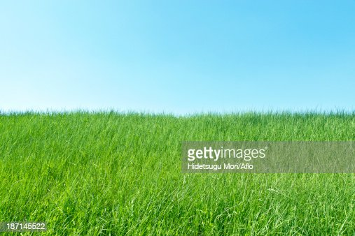 Green meadow and sky