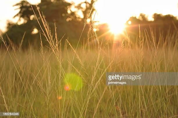Grünen Wiese in Sonne Strahlen