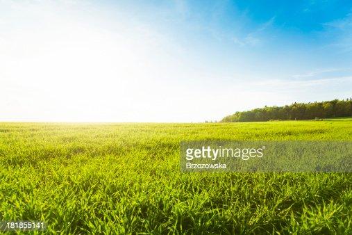 グリーンの草地