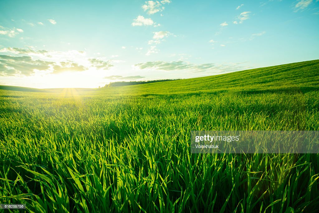 Green meadow : Stock Photo