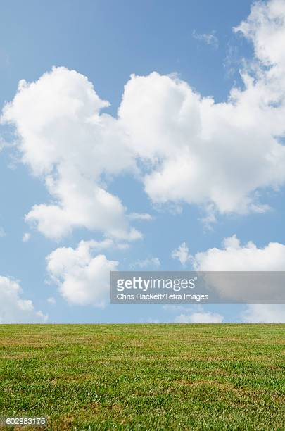 Green meadow with cloudy sky