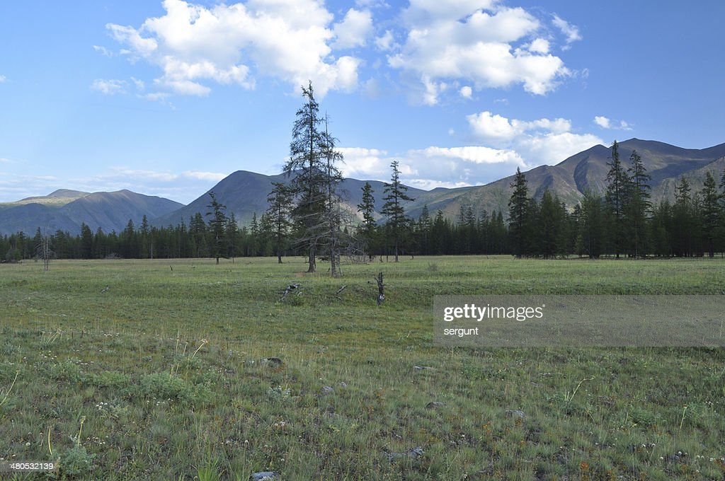 Green meadows in mountain valley of the river Suntar. : Stock Photo