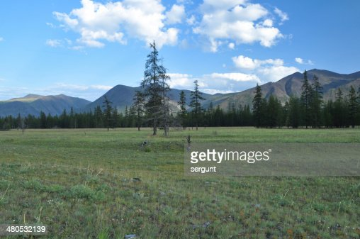 Green meadows in mountain valley of the river Suntar. : Stockfoto
