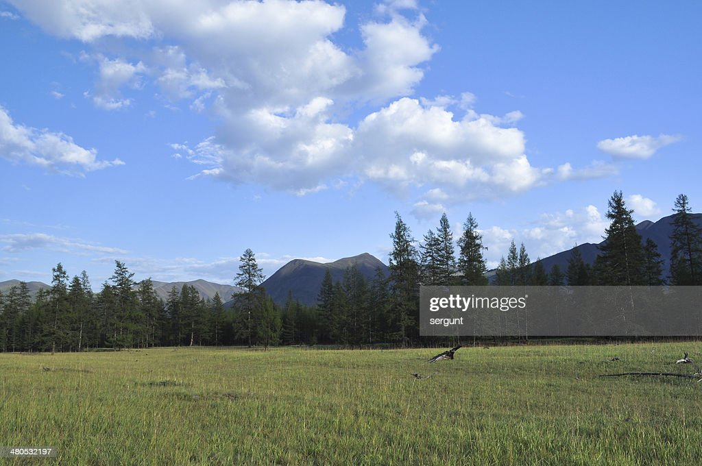 Green meadows in mountain valley of the river Suntar. : Stock Photo
