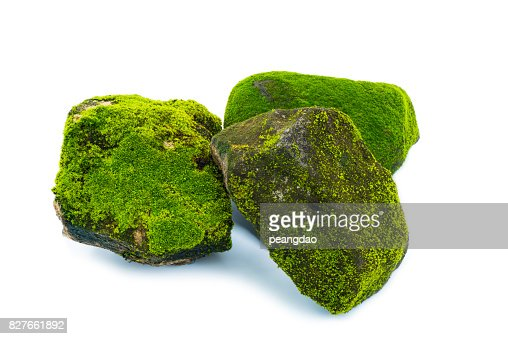 Green moss and stone isolated on white background : Stock Photo