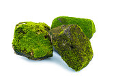 Green moss and stone isolated on white background