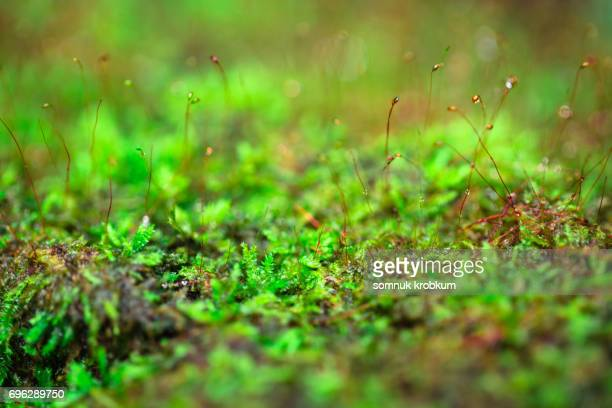 Green moss in rainy season