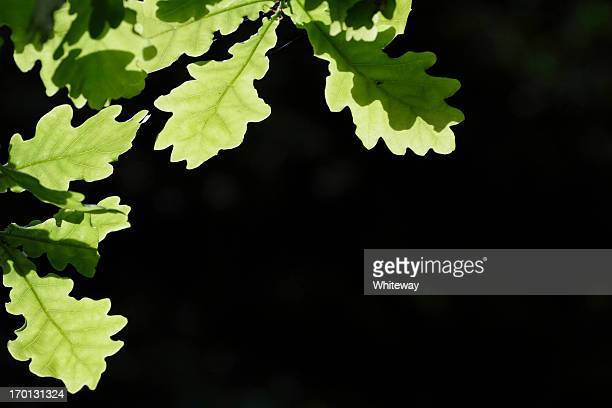 Green oak leaf close up corner piece