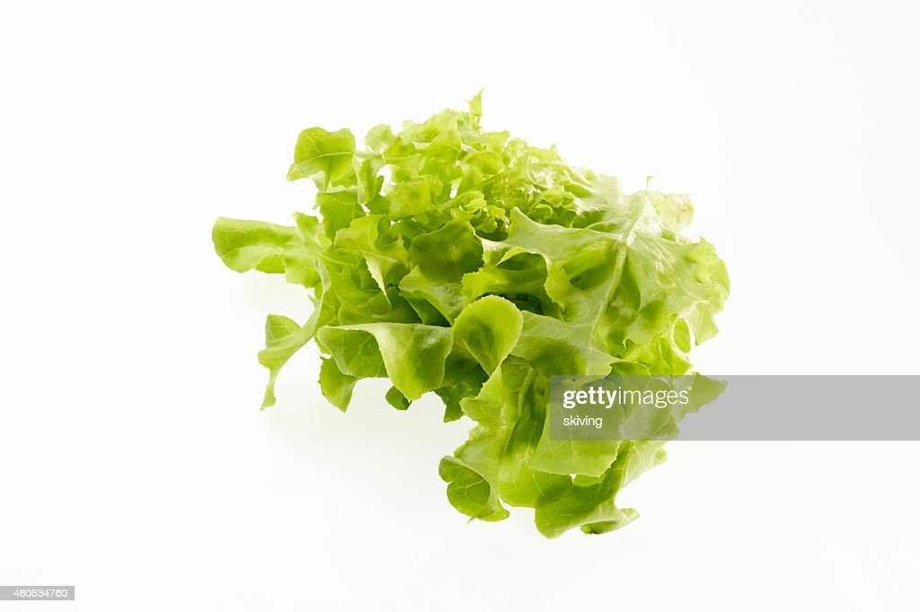 Green oak : Stock Photo
