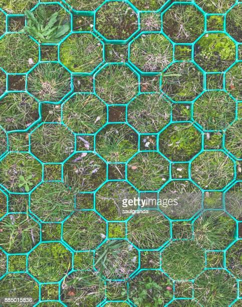 Green octagons