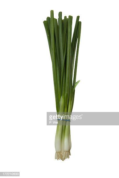 Green Onions XXL with Path