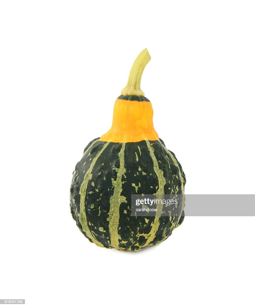 Green ornamental squash with yellow neck, green stripes and bump : Foto de stock