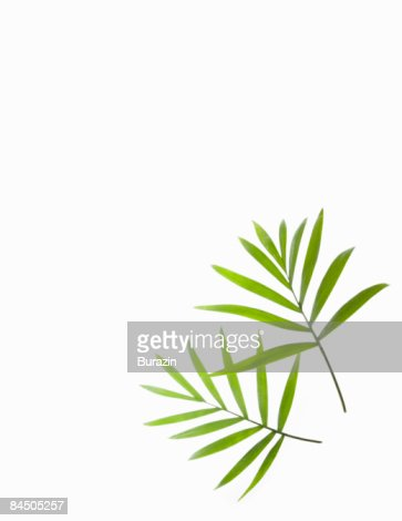 Green Palm leaf background still life