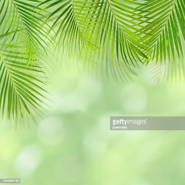 Green palm leaf background with copy space