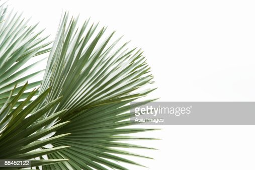 green palm tree with sky as background