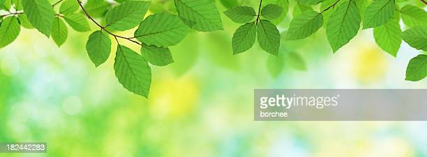 Green Panoramic Leaves