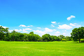 Green park and tree with blue sky