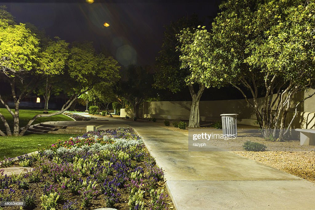 Green park by night : Stock Photo