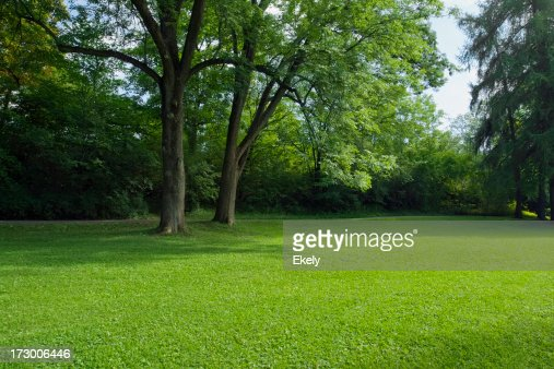 Park with green lawn.