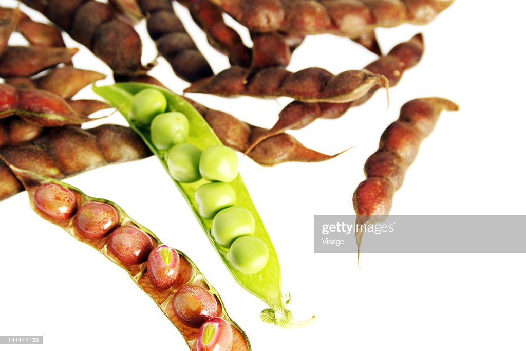 A green pea pod among brown peas : Stock Photo