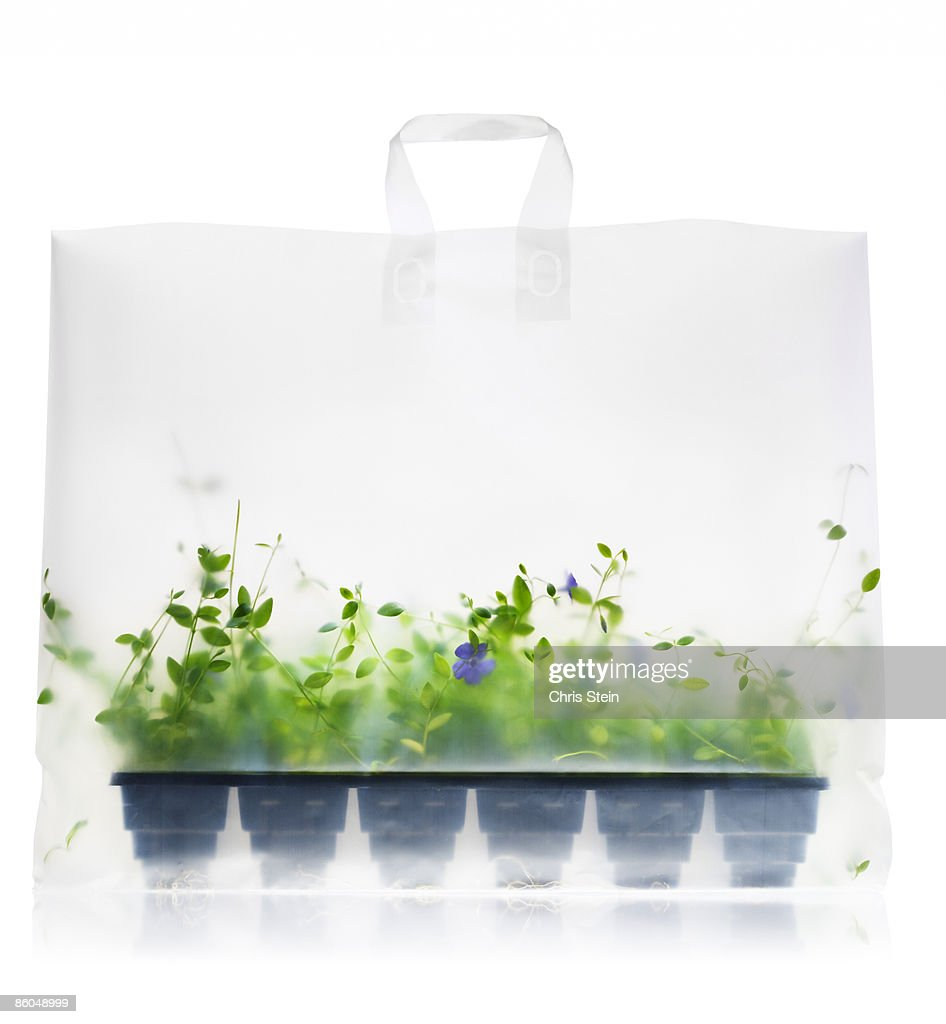 Green plant flat in shopping bag : Stock Photo