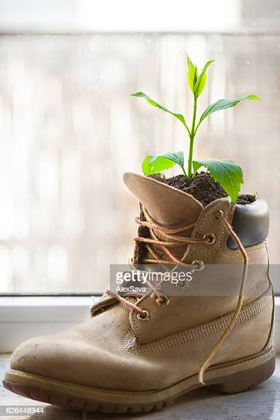 Green plant growing from an old leather boot