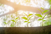 Green plant growing growth in sunshine lighting and natural tree bokeh background. Ecology business increase financial progress concept. Earth Day