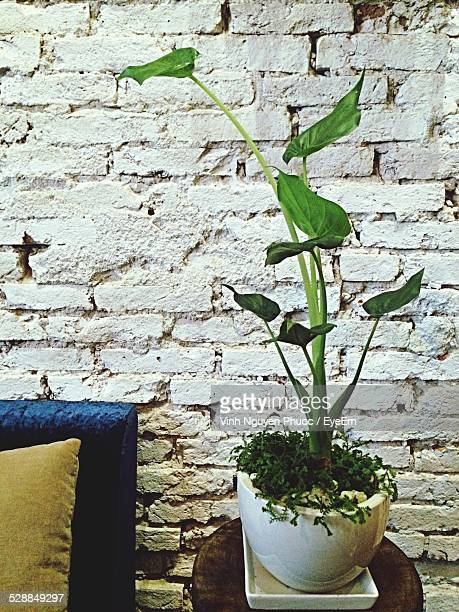 Green Plant In Flower Pot On Table
